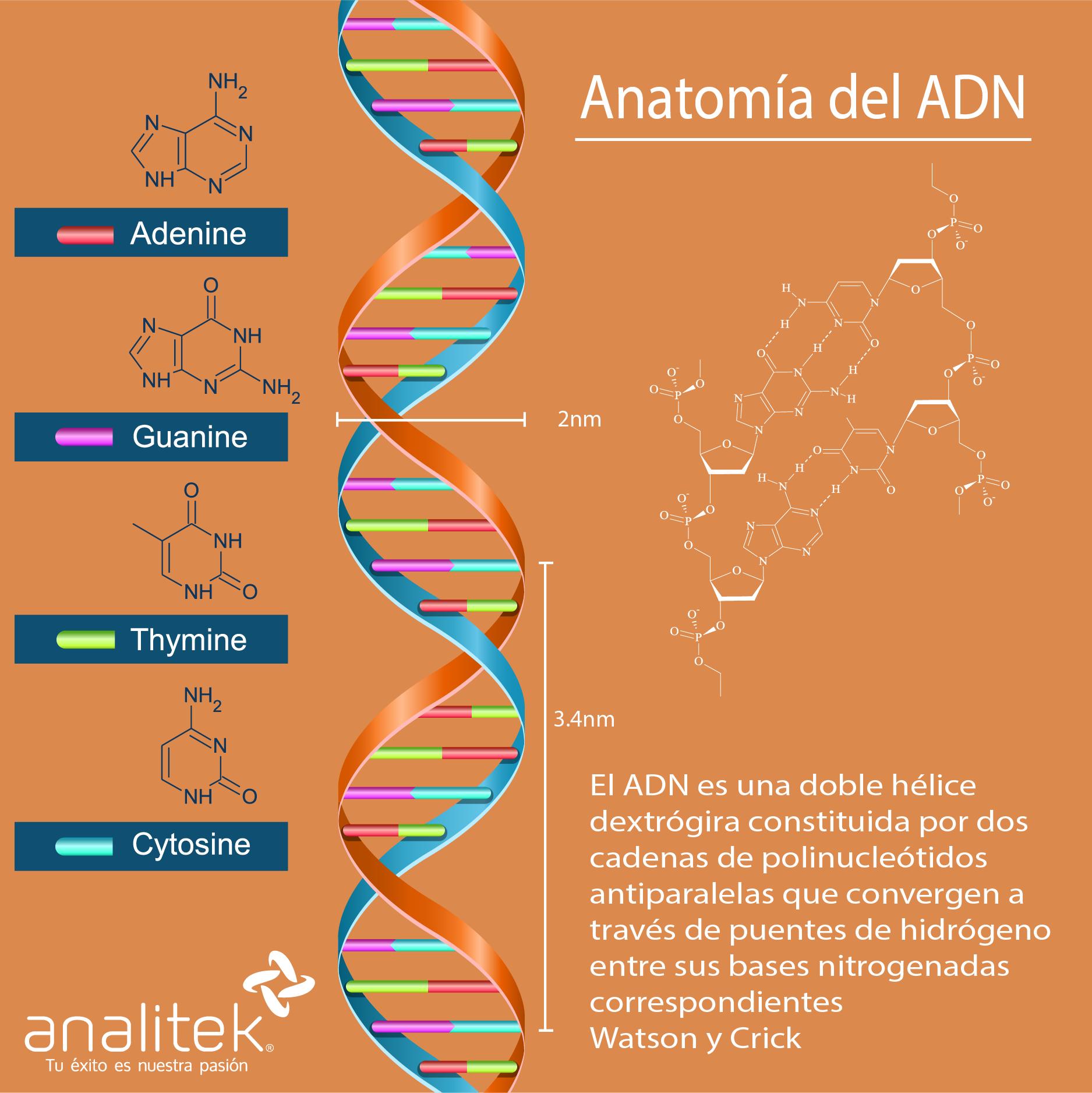 Secuenciación Orígenes De La Investigación De ácidos Nucleicos
